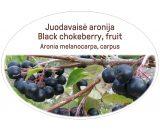 Black Chokeberry, fruit / Aronia melanocarpa, carpus
