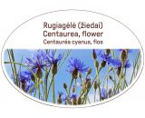 Centaurea, flower / Centaurea cyanus, flos