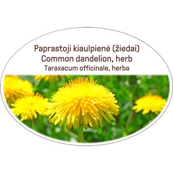 Common dandelion, herb / Taraxacum officinale, herba