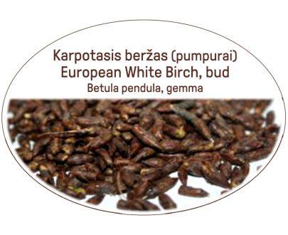 European White Birch, bud / Betula pendula, gemma
