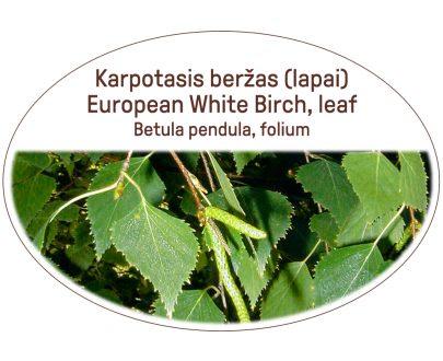 European White Birch, leaf / Betula pendula, folium