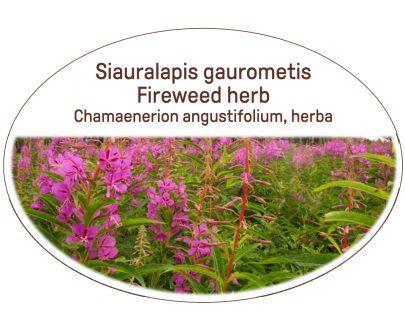 Fireweed herb / Chamaenerion angustifolium, herba
