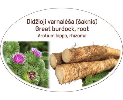 Great burdock, root / Arctium lappa, rhizoma