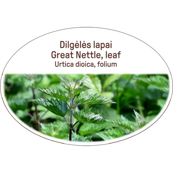 Great nettle, leaf / Urtica dioica, folium