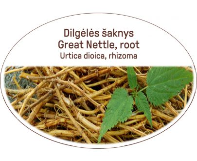 Great nettle, root / Urtica dioica, rhizoma