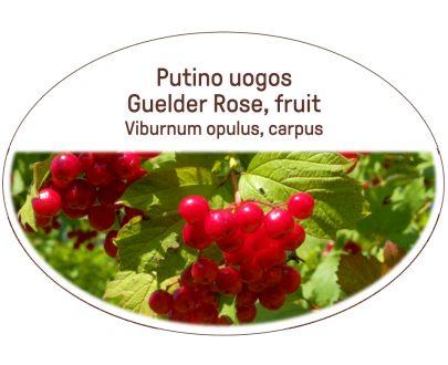 Guelder rose, fruit / Viburnum opulus, carpus