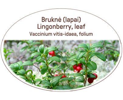 Lingonberry, leaf / Vaccinium vitis-idaea, folium