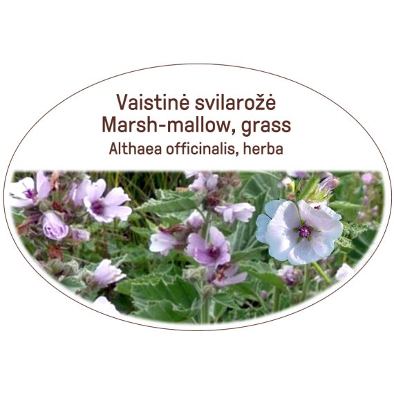 Marsh-mallow, grass / Althaea officinalis, herba