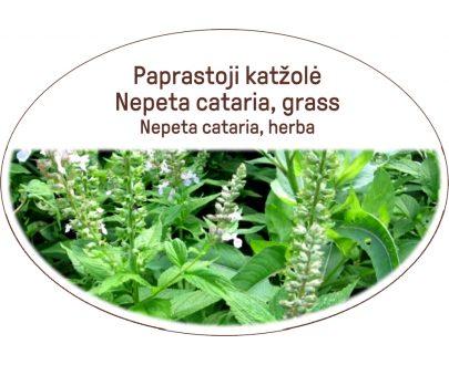 Nepeta cataria, grass / Nepeta cataria, herba
