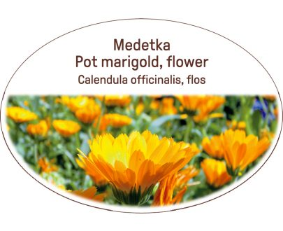 Pot marigold, flower / Calendula officinalis, flos