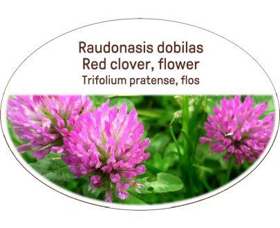 Red clover, flower / Trifolium pratense, flos