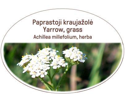 Yarrow, grass / Achillea millefolium, herba