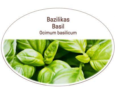 Basil, Ocimum basilicum