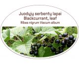 Blackcurrant, leaf / Ribes nigrum Viscum album