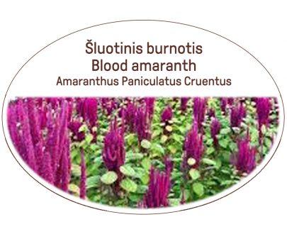 Blood amaranth, Amaranthus Paniculatus Cruentus