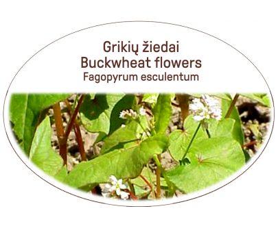 Buckwheat flowers, Fagopyrum esculentum