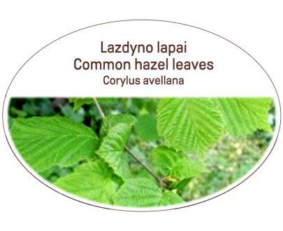 Common hazel leaves, Corylus avellana