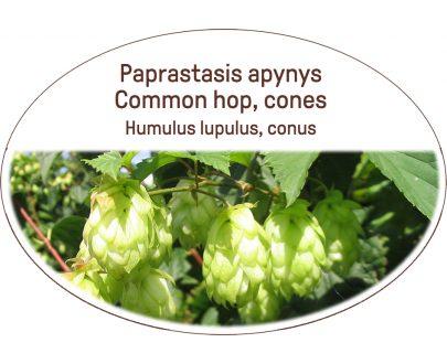 Common hop, cones / Humulus lupulus, conus