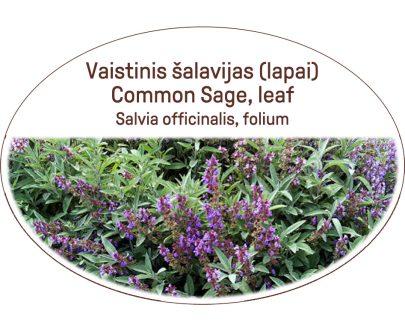 Common sage, leaf, Salvia officinalis, folium