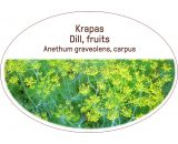 Dill, fruits / Anethum graveolens, carpus