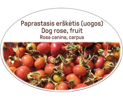 Dog rose, fruit, Rosa canina, carpus