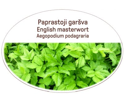 English masterwort, Aegopodium podagraria