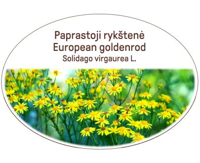 European goldenrod, Solidago virgaurea L.