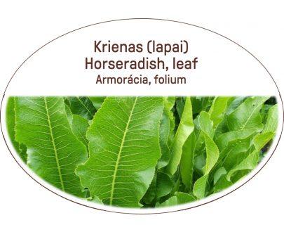Horseradish, leaf / Armoracia, folium