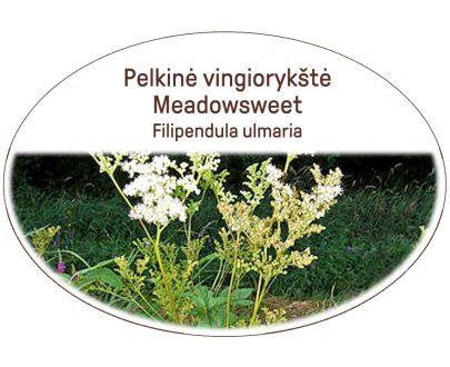 Meadowsweet, Filipendula ulmaria