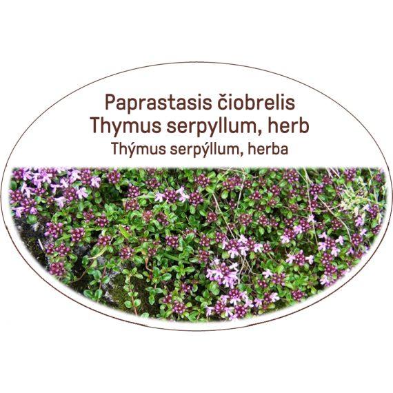 Thymus serpyllum, herb, Thymus serpyllum, herba