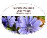 Chicory seed, Cichorium intybus