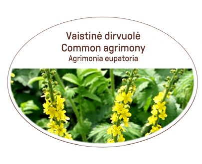 Common agrimony, Agrimonia eupatoria