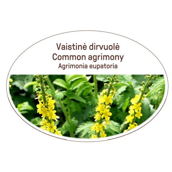 Common agrimony, Agrimonia eupatoria