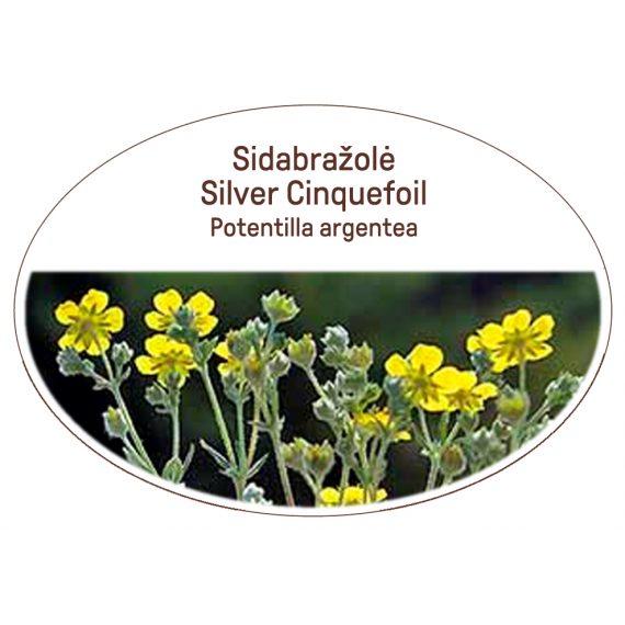 Silver Cinquefoil, Potentilla argentea